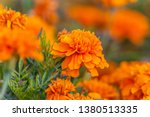 Beautiful Bright Orange And...