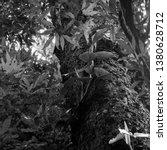 vegetation virgin of the... | Shutterstock . vector #1380628712