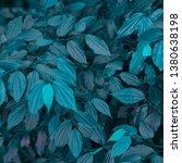 vegetation virgin of the... | Shutterstock . vector #1380638198