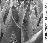 vegetation virgin of the... | Shutterstock . vector #1380638528