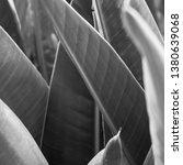 vegetation virgin of the... | Shutterstock . vector #1380639068