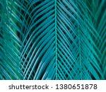 vegetation virgin of the... | Shutterstock . vector #1380651878
