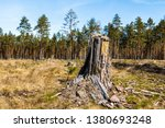 stack of felled trees in the... | Shutterstock . vector #1380693248