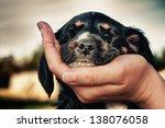 Stock photo puppy sleeps on the hand against the sky 138076058