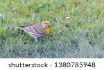 horizontal photo with male... | Shutterstock . vector #1380785948