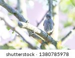 horizontal photo with male... | Shutterstock . vector #1380785978