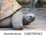 Stock photo an aldraba tortoise in captivity the aldabra giant tortoise from the islands of the aldabra 1380789362
