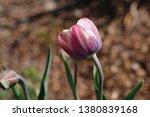 portrait of pastel multicolor... | Shutterstock . vector #1380839168