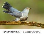 common cuckoo  cuculus canorus  ... | Shutterstock . vector #1380980498