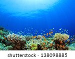 underwater coral reef and... | Shutterstock . vector #138098885