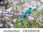 Colorful Long Tailed Quetzel...