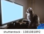 Stock photo the cat is sitting on the table in front of a computer monitor cat works at the computer the blue 1381081892