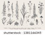 garden flowers. set. vintage... | Shutterstock .eps vector #1381166345