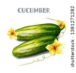 cucumber isolated vector... | Shutterstock .eps vector #1381271282
