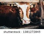 simmental cow  bos taurus ...   Shutterstock . vector #1381272845