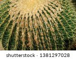 close up of big cactus exotic... | Shutterstock . vector #1381297028