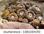 close up of brown cactus exotic ... | Shutterstock . vector #1381334192
