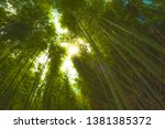sunny day bamboo forest kyoto... | Shutterstock . vector #1381385372