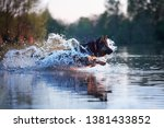 agile dog  running in deep ... | Shutterstock . vector #1381433852