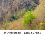 fresh green leave tree in dry... | Shutterstock . vector #1381567868