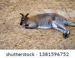 full body of relex australian... | Shutterstock . vector #1381596752