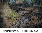 the picture after the felling... | Shutterstock . vector #1381687565