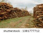 felled trees stacked.... | Shutterstock . vector #1381777712