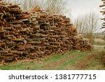 felled trees stacked.... | Shutterstock . vector #1381777715