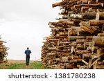 worker chooses a log. felled... | Shutterstock . vector #1381780238