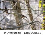 bird birdwatching wild wildlife ... | Shutterstock . vector #1381900688