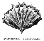 stony coral in the suborder... | Shutterstock .eps vector #1381930688