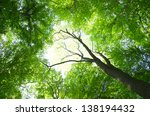 trees in a green forest in... | Shutterstock . vector #138194432