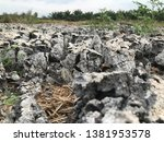 dry sediment of biogas... | Shutterstock . vector #1381953578