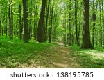 trees in a green forest in... | Shutterstock . vector #138195785
