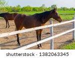 horse. the herd of horses...   Shutterstock . vector #1382063345