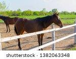 horse. the herd of horses...   Shutterstock . vector #1382063348