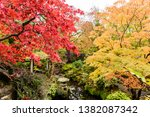 Acer Palmatium trees with red and orange foilage during autumn at the Japanese Gardens, Irish National Stud, Kildare