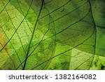Stock photo autumn leaves in the detail 1382164082