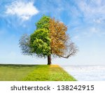 four seasons tree time passing... | Shutterstock . vector #138242915