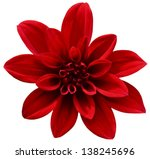 Red Isolated Flower