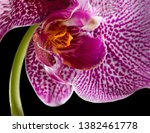 Close Up Purple Orchid - Fine Art prints