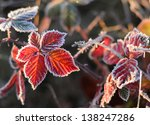 Frozen Autumn Blackberry Leaves.