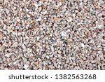 colorful sea shells whole... | Shutterstock . vector #1382563268