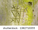 Notched Beech Tree Bark With...