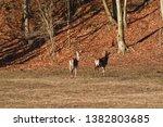 Flock Of Deerskin Running...