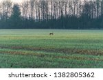 Stock photo hare running ona a field during morning hours and sunrise 1382805362