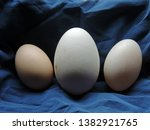 Close up of three eggs. From the left to right: chicken egg, the largest goose egg, duck egg. Poland, Europe