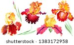 red bold encounter iris floral... | Shutterstock . vector #1383172958