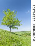 tree photo on a hill slope | Shutterstock . vector #138341576