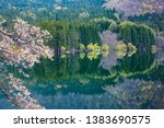 cherry blossoms blooming on the ... | Shutterstock . vector #1383690575